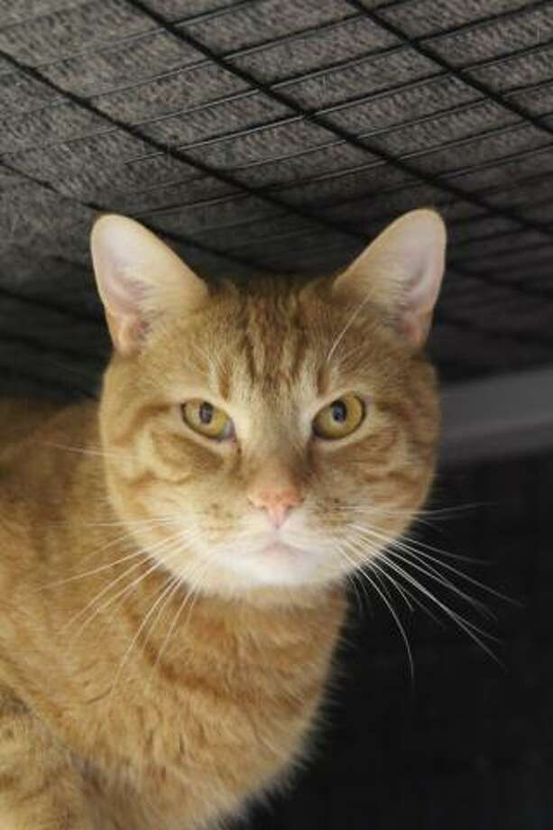 Simba is a playful and loving three-year-old boy. (Mary Lou Baker)