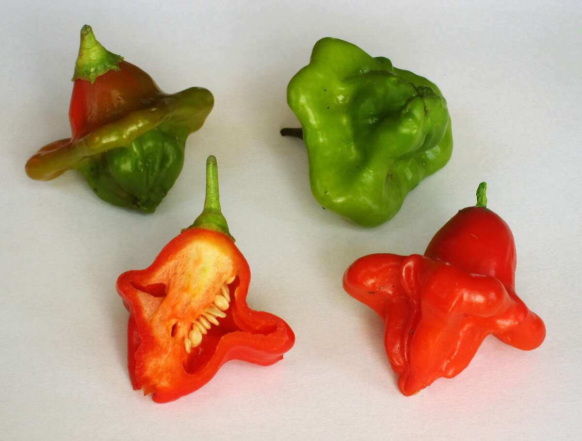 Peridot peppers are a mild and flavorful variety that thrives in cooler or warmer microclimates.