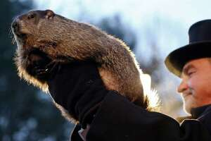"""Groundhog Club co-handler John Griffiths holds Punxsutawney Phil during the annual celebration of Groundhog Day on Gobbler's Knob in Punxsutawney, Pa., Tuesday, Feb. 2, 2016. The handlers say the furry rodent has failed to see his shadow, meaning he's """"predicted"""" an early spring. (AP Photo/Keith Srakocic)"""