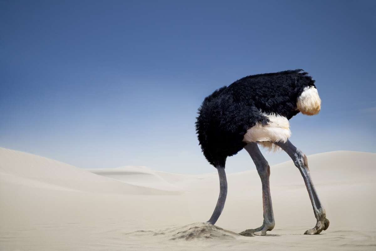 Funny images of ostriches around the world Ostrich burying head in the sand at the Tsavo East National Park in Kenya.