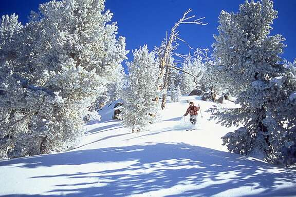 Male skier skiing downhill on powder snow, Lake Tahoe, California, USA