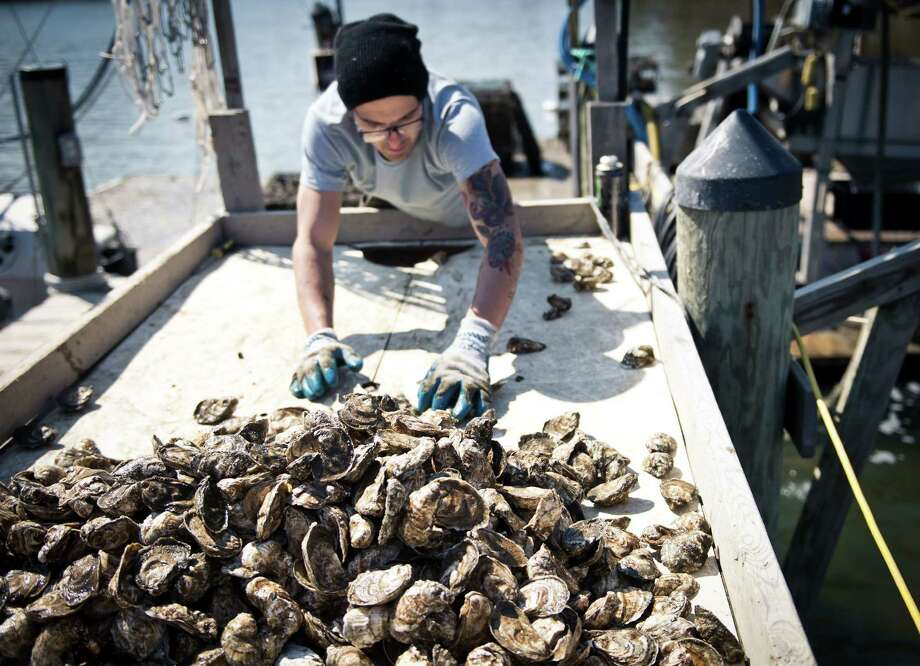 (FILES) This file photo taken on March 20, 2014 shows an employee of the Hollywood Oyster company sorts and counts fresh oysters at the company farm in the waters of Chesapeake bay near Hollywood, MD.  Tiny bits of plastic that pollute the world's waters may also interfere with oysters' ability to reproduce and thrive, according to a study February 1, 2016 by researchers in France and Belgium. The damage happens quickly, according to the findings of a study using Pacific oysters that were kept in tanks.  / AFP / MLADEN ANTONOVMLADEN ANTONOV/AFP/Getty Images ORG XMIT: Tiny bits Photo: MLADEN ANTONOV / AFP or licensors