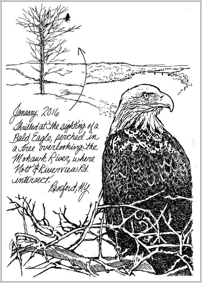 Not so long ago, bald eagle sightings in New York were rare, if not unheard of. Although an estimated half a million of these magnificent raptors populated North American before the arrival of immigrant settlers, loss of habitat, indiscriminate hunting and residual pollution, eventually devastated our soaring symbols of a fledgling nation's hopes and aspirations to near extinction. (Carol Coogan)