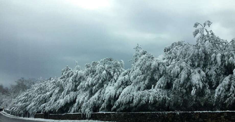 A scene of winter beauty -- fresh snow gilding trees on Unquowa Road -- was captured during Friday's storm by reader Phil Spalla. Photo: Contributed Photo / Phil Spalla / Fairfield Citizen