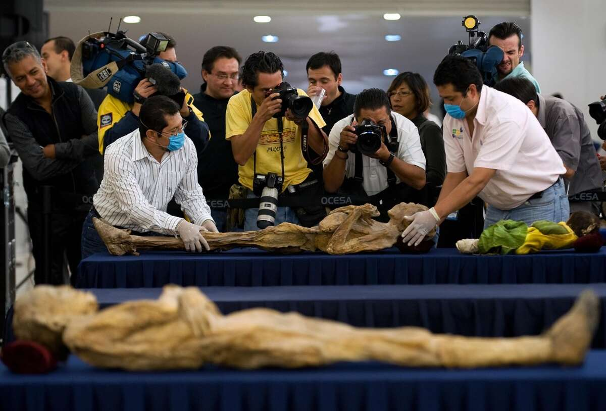 Museum workers place a mummy on a table during a press conference to launch an itinerant exhibit of 36 of the famous Mummies of Guanajuato, in Mexico City, on August 31, 2009.