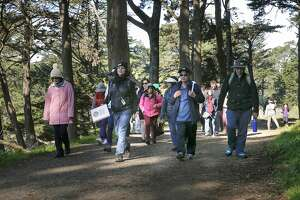 Golden Gate Park offers weekend relief from Super Bowl frenzy - Photo