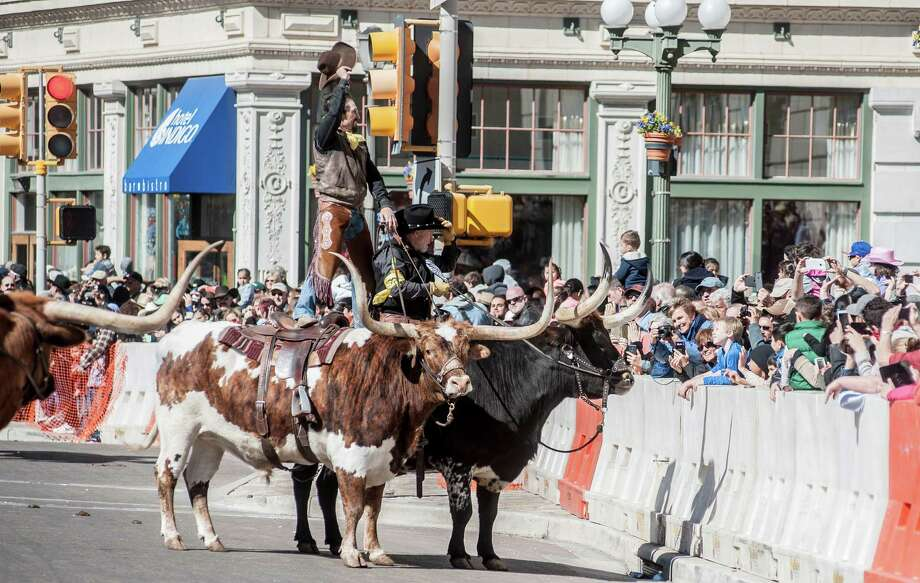 Annual Cattle Drive Through Downtown San Antonio Is No