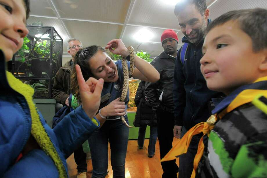 Educator Leigha Krize shows scouts a Western Hognose snake named Pumba during the Cub Scout Winter Wild at the Stamford Museum and Nature Center in Stamford, Conn.  on Feb. 5, 2016. Over 400 Cub Scouts and their families participated in the event that explored rainforest animals, beetles and bone artifacts, owl artifacts, making elephant toothpaste, making paper out of recyclables, fire-starting with a bow drill and a big Star Wars exhibit. Photo: Matthew Brown, Hearst Connecticut Media / Stamford Advocate