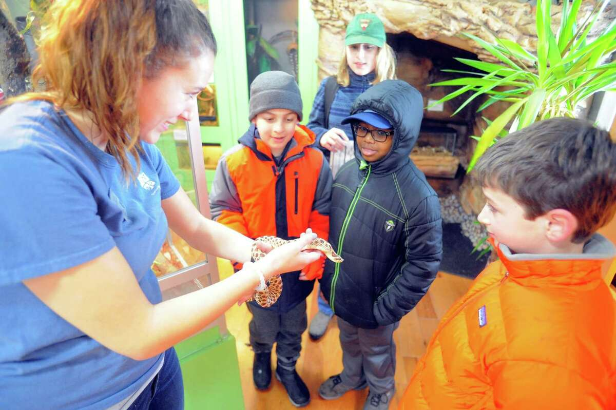 Educator Leigha Krize shows scouts a Western Hognose snake named Pumba during the Cub Scout Winter Wild at the Stamford Museum and Nature Center in Stamford, Conn. on Feb. 5, 2016. Over 400 Cub Scouts and their families participated in the event that explored rainforest animals, beetles and bone artifacts, owl artifacts, making elephant toothpaste, making paper out of recyclables, fire-starting with a bow drill and a big Star Wars exhibit.