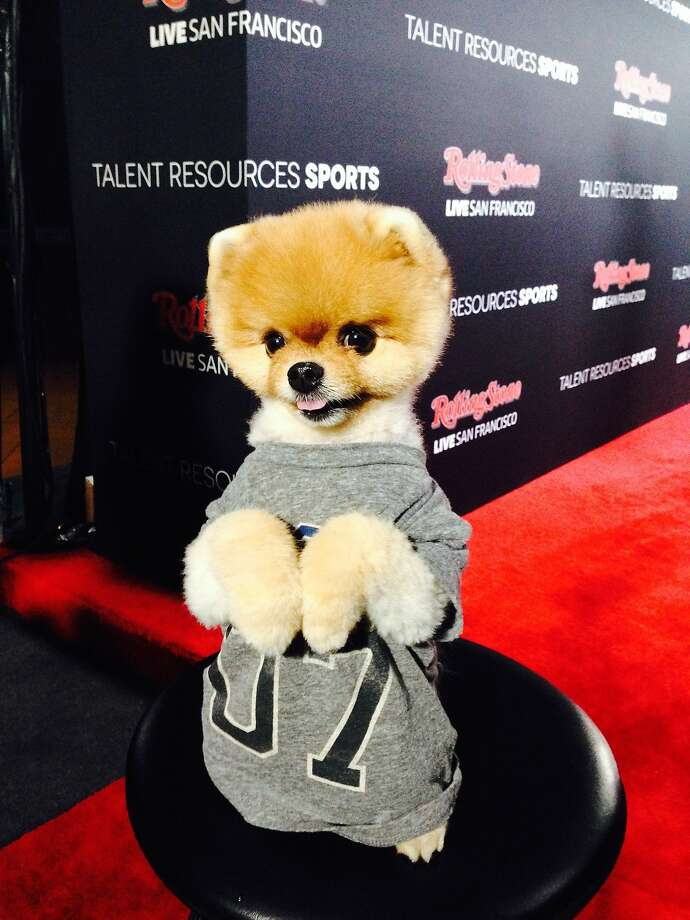 Jiff the Pomeranian was quite the party-hopper, turning up at Rolling Stone following the Maxim party. Photo: Tony Bravo, The Chronicle