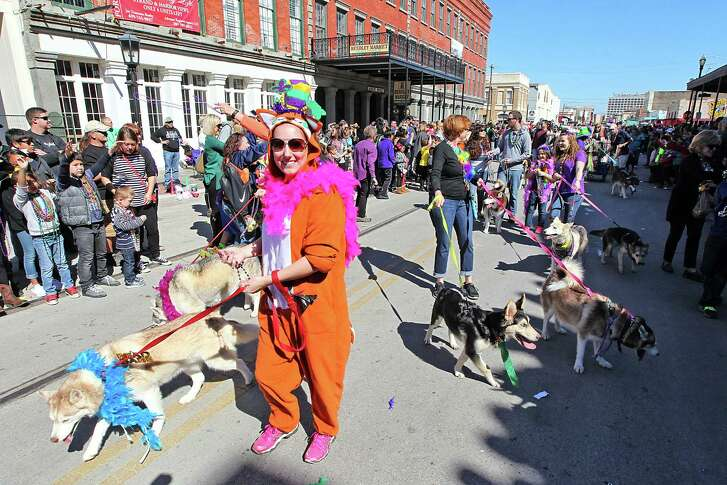 The annual Krewe of Barkus and Meoux Mardi Gras parade made its way down the Strand on Sunday in Galveston. The parade, which benefits the Galveston Island Humane Society, featured about 100 pets and owners. People parade their dogs and animals on Sunday , February 7, 2016 in the Barkus Parade on the Strand in Galveston, Texas. (Photo: Thomas B. Shea/For the Chronicle)