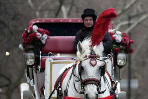 Carriage horses rein in mayor's ego - Photo