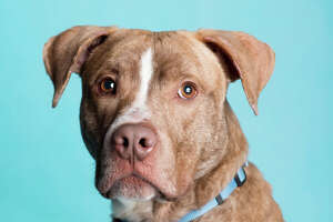 Pet of the week: Leo - Photo