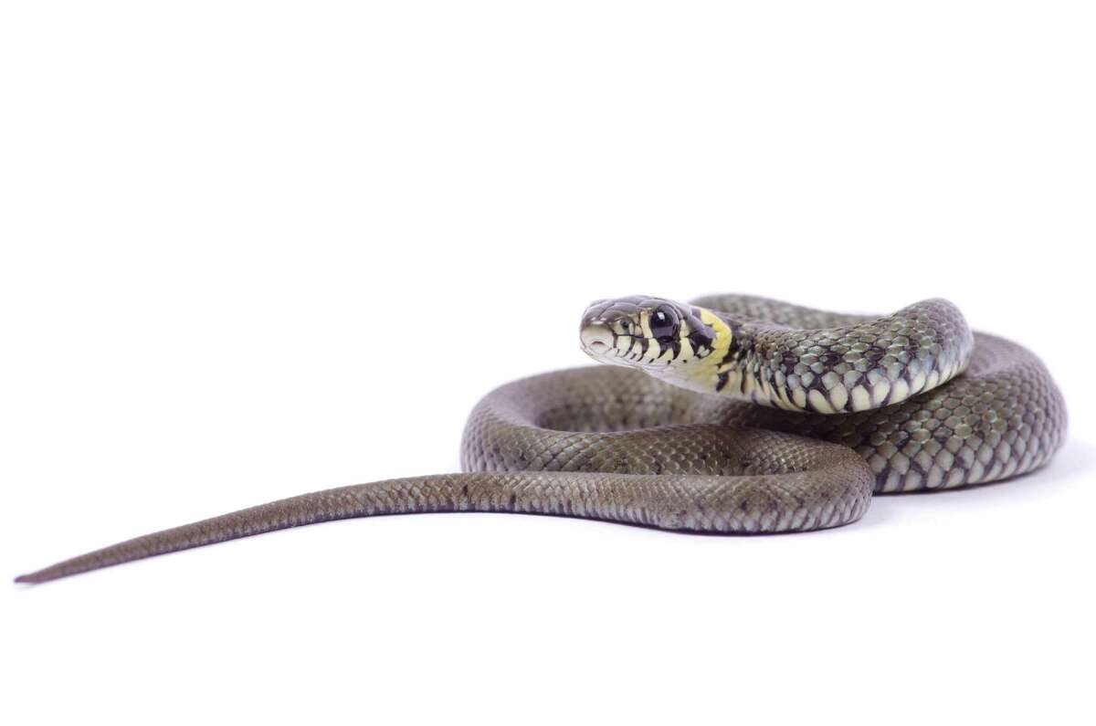"""""""They slammed the door and I opened it back up to see a very large black snake making its way up the stairs. They proceeded to run out of the house."""" - Christine Frith, Coldwell Banker Prime Properties"""