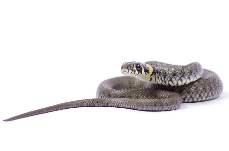 """""""They slammed the door and I opened it back up to see a very large black snake making its way up the stairs. They proceeded to run out of the house."""" — Christine Frith, Coldwell Banker Prime Properties / Pakhnyushchyy - Fotolia"""