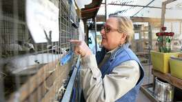 Betty Heacker, owner of Wabash Feed & Garden Store on Washington Avenue, checks on young rabbits there. The store is moving after 26 years.