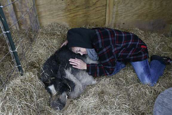 Rowdy Girl Sanctuary founder King-Sonnen lies with Herman in his shelter. Herman, a bristly black-and-white pig, was the first animal rescued by the ranch.