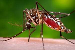 Yolo County resident tests positive for Zika virus - Photo