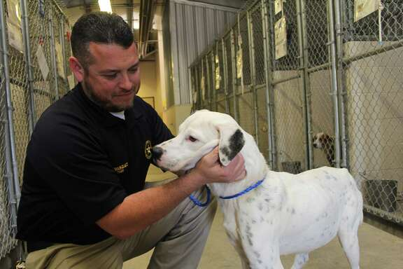 Fort Bend County Animal Services director Rene Vasquez, plays with a white Labrador-Staffordshire mix at the county's annimal control shelter at 1210 Blume Road in Rosenberg. The county is publicizing lists of animals that have been at the shelter the longest.  Fort Bend County Animal Services director Rene Vasquez, plays with a white Labrador-Staffordshire mix at the county's annimal control shelter at 1210 Blume Road in Rosenberg. The county is publicizing lists of animals that have been at the shelter the longest.