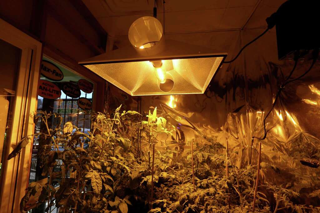 A Traditional 1000 Watt High Pressure Sodium Grow Lamp On Display At  Ultimate Hydroponic Garden Supply