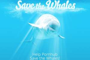 Major porn site raising money for Washington nonprofit to save whales - Photo