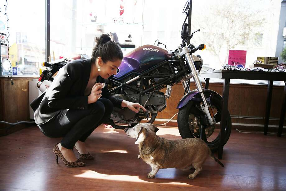 Twix (right) raises his paw to shake the hand of Jennifer Ortiz (left), optician San Francisco Optics. Photo: Lea Suzuki, The Chronicle