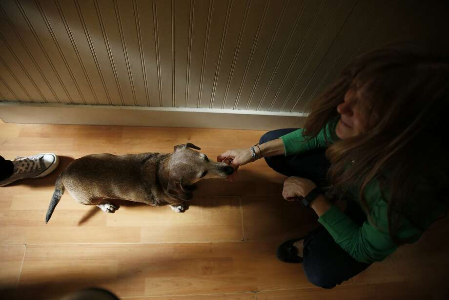 Pamela Habel, owner Catnip and Bones, gives Twix a treat. Photo: Lea Suzuki, The Chronicle