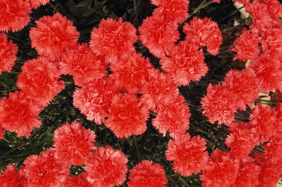 A high school student delivered nearly 900 carnations to girls at his high school for Valentine's Day.  Photo: DEA / C. SAPPA, Getty Images / De Agostini Editorial