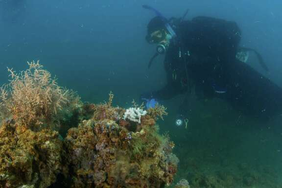 University of Texas Rio Grande Valley assistant professor Dr. Richard Kline, who mapped out the 1,650-acre Rio Grande Valley Reef with ground-breaking low-relief reefs and big structures, dives at a large natural reef, where little red snapper are never seen.