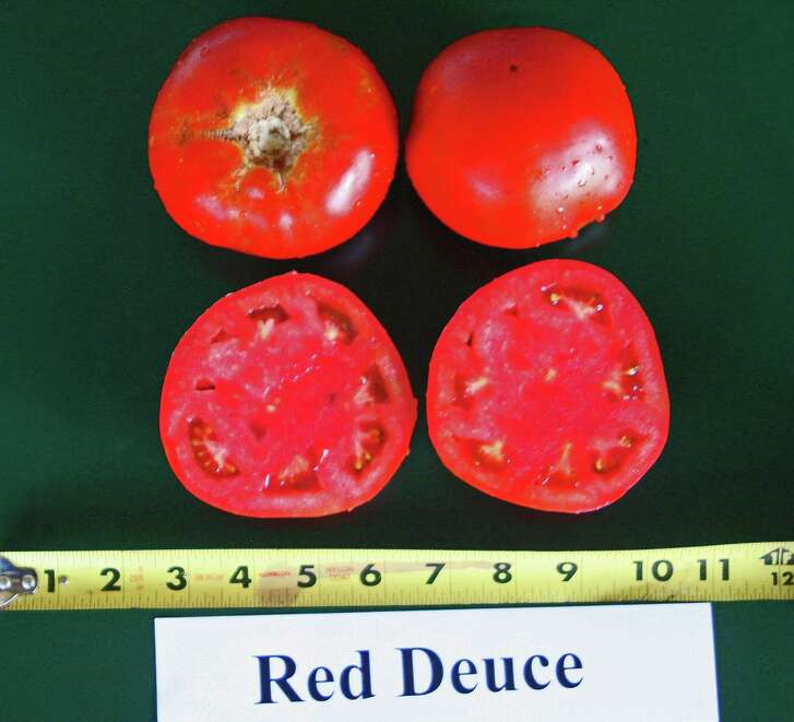 The Red Deuce is the 2016 Rodeo Tomato.