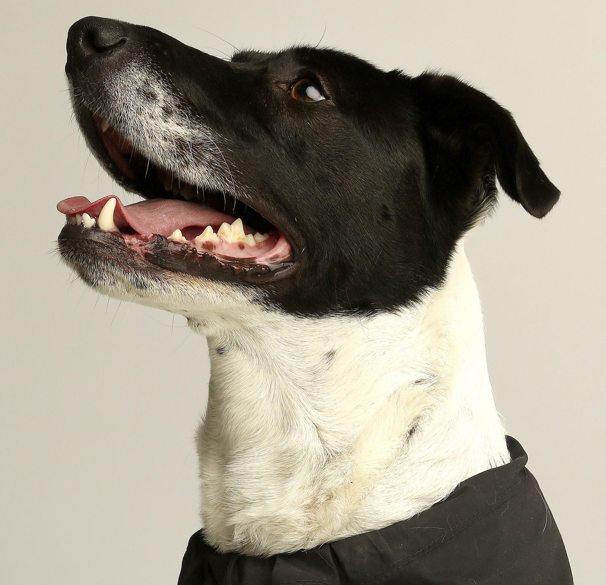 Www Apartmentrentals Com: Texas Cities Dominate For Pet Friendly Apartment Rentals