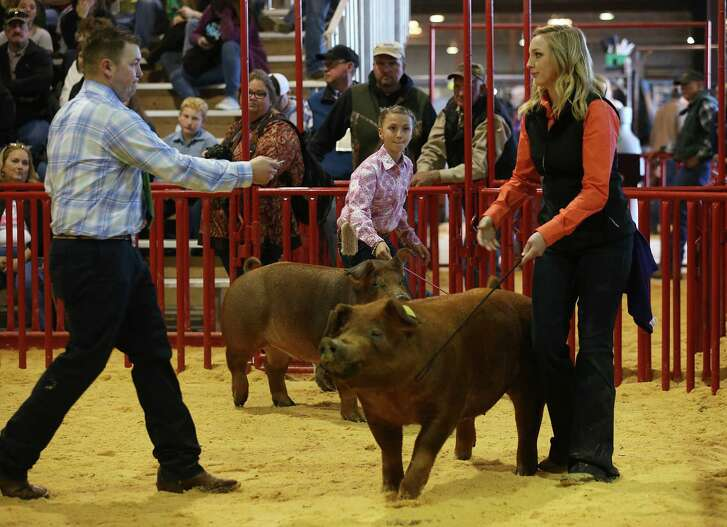 "Molly Boswell, 11 of Malakoff, holds on to ""Rosie,"" as Brandon Yantis (left) judges Morgan Wintermeier's entry during the 11th class of the junior breeding swines during the first day of the San Antonio Stock Show & Rodeo. Wintermeier is with the Judson FFA."