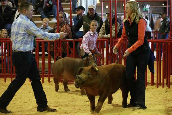 """LEFT: Molly Boswell, 11, center, of Malakoff, Texas, holds on to """"Rosie,"""" as Brandon Yantis, left, judges Morgan Winterneier's entry during the 11th class of the junior breeding swines during the first day of the San Antonio Stock Show and Rodeo, Thursday, Feb. 11, 2016. Wintermeier is with the Judson FFA."""