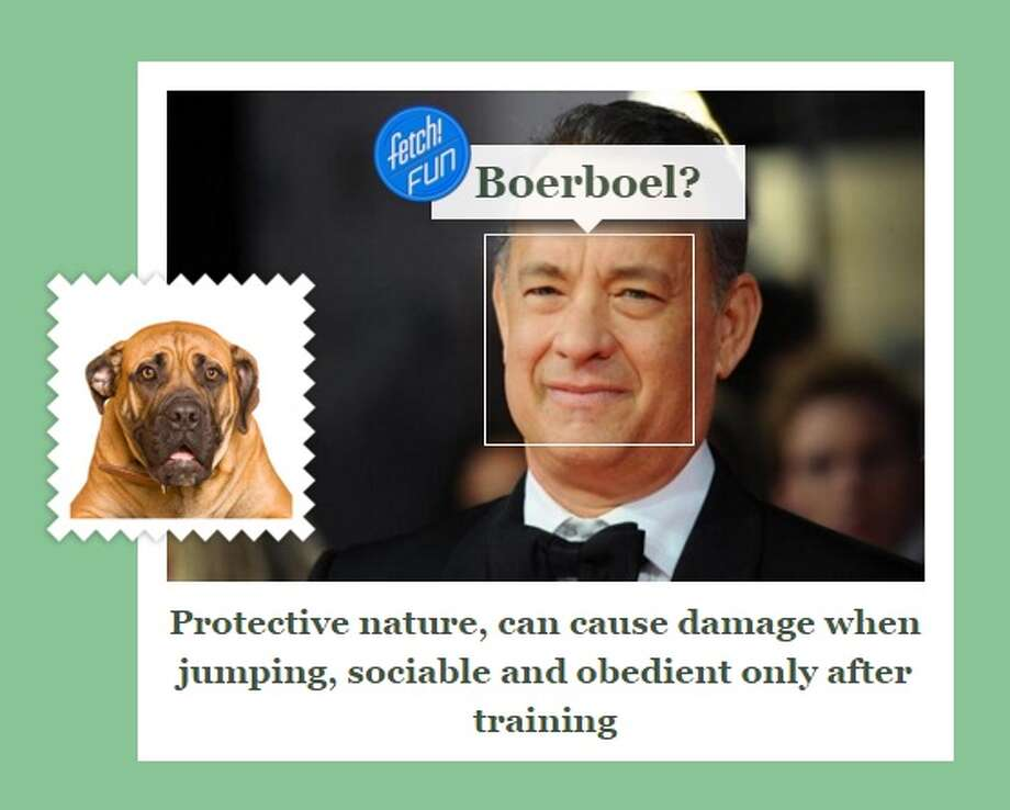 Oakland native Tom Hanks got a boerboel and may need some additional training according to the #whatDogRobot.