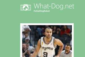 Online tool reveals what dog breed Spurs are most like - Photo