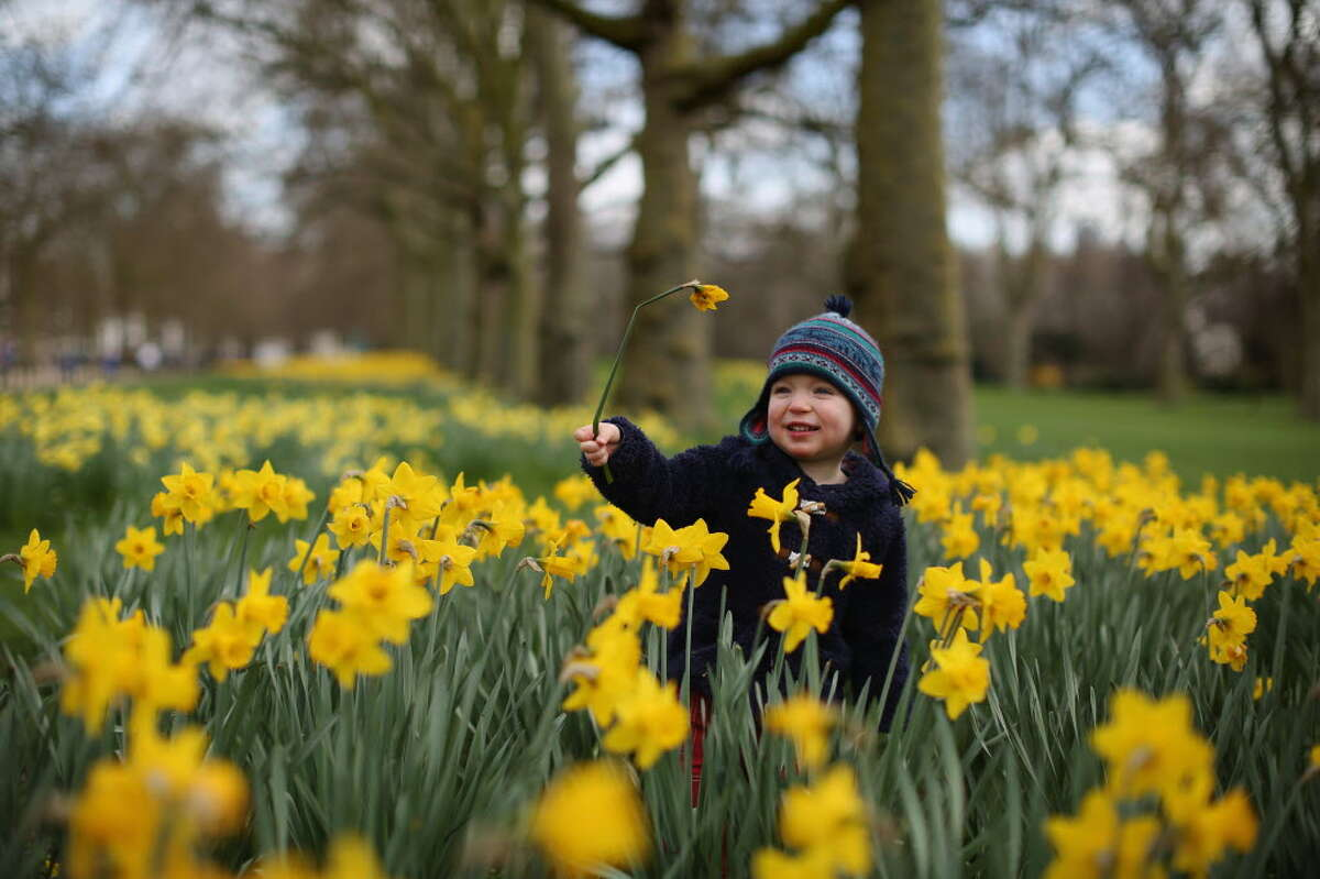 Meriden Daffodil Festival Pre-Festival weekend April 23-24, 2016Enjoy food trucks, a children's fishing derby, Connecticut's largest tag sale, carnival rides and a road race. Find out more.