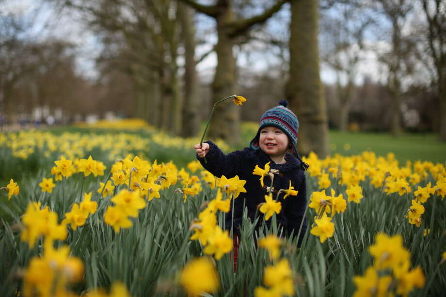 Meriden Daffodil Festival Pre-Festival weekendApril 23-24, 2016Enjoy food trucks, a children's fishing derby, Connecticut's largest tag sale, carnival rides and a road race. Find out more.