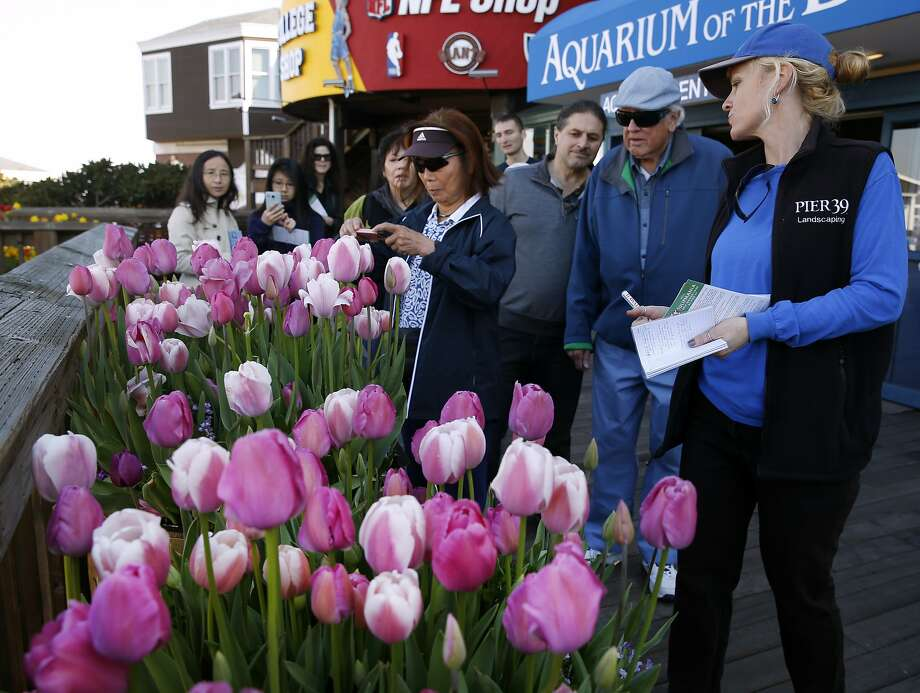 Landscaper Melissa Wagner (right) leads visitors on a guided tour through the tulip displays at Pier 39 in San Francisco, Calif. on Saturday, Feb. 13, 2016. The annual Tulipmania festival features more than 39,000 blooming tulips. Photo: Paul Chinn, The Chronicle