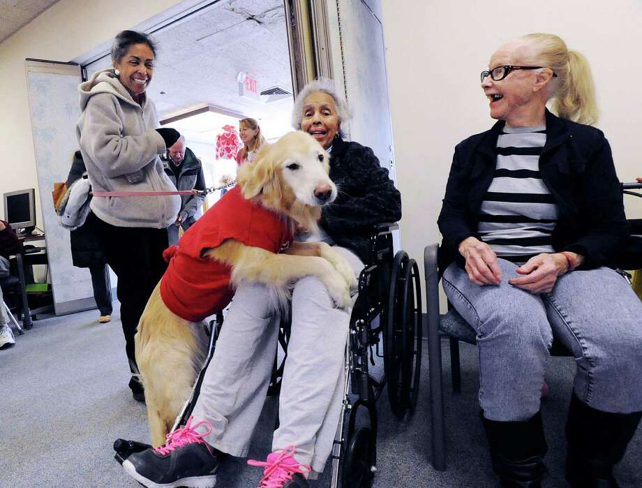 Donna Webster of Greenwich, left, laughs as her Golden Retriever, Chloe, jumps into the lap of her mother Christine Webster, a Nathaniel Witherell resident, as fellow resident Nola Larkin, right, laughs as well, during the Pooches on Parade event at Nathaniel Witherell nursing home in Greenwich, Conn., Saturday, Feb. 13, 2016. The annual event is organized by Mary Bruce, the director of activities at Nathaniel Witherell, who said it gives both Greenwich residents (who bring their dogs in to the home to participate) and Nathaniel Witherell residents, an opportunity to interact with dogs, each other and show their appreciation for man's best friend. Photo: Bob Luckey Jr., Hearst Connecticut Media / Greenwich Time