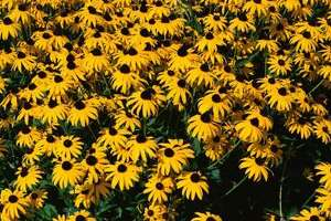 Nurture life this spring by establishing a native plant garden - Photo
