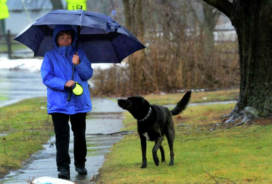 Fighting driving winds and rain, Diane Hernciar, who operates a dog walking business called Dogs To Go, walks Swanson along Edward Steet in Fairfield, Conn., on Tuesday Feb. 16, 2016. This is one of 17 dogs she will walk today. Photo: Christian Abraham / Hearst Connecticut Media / Connecticut Post