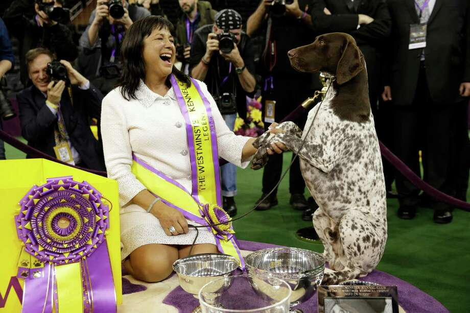 Valerie Nunes-Atkinson and CJ, a German shorthaired pointer, pose for photographers after CJ won best in show at the 140th Westminster Kennel Club dog show, Tuesday, Feb. 16, 2016, at Madison Square Garden in New York. (AP Photo/Seth Wenig) ORG XMIT: NYMA116 Photo: Seth Wenig, AP / AP