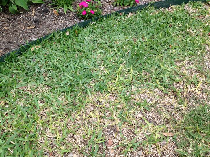 As much as you want to rush your lawn green-up, it does not do any good to fertilize the lawn early. Our hot weather grasses can only take up the nitrogen from fertilizer after they have an active top growth. Wait to fertilize your lawn until you have mowed real grass two times. That will normally be between April 15 and May 1.