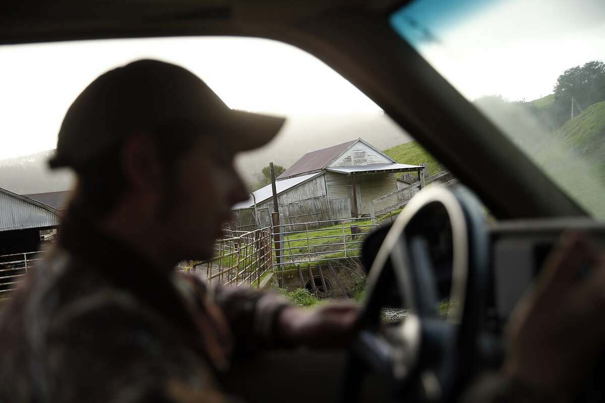Ryan Giammona drives out to the fields to feed beef cattle on his father's leased ranch in Point Reyes National Seashore in Olema, Calif., on Thursday, February 18, 2016.