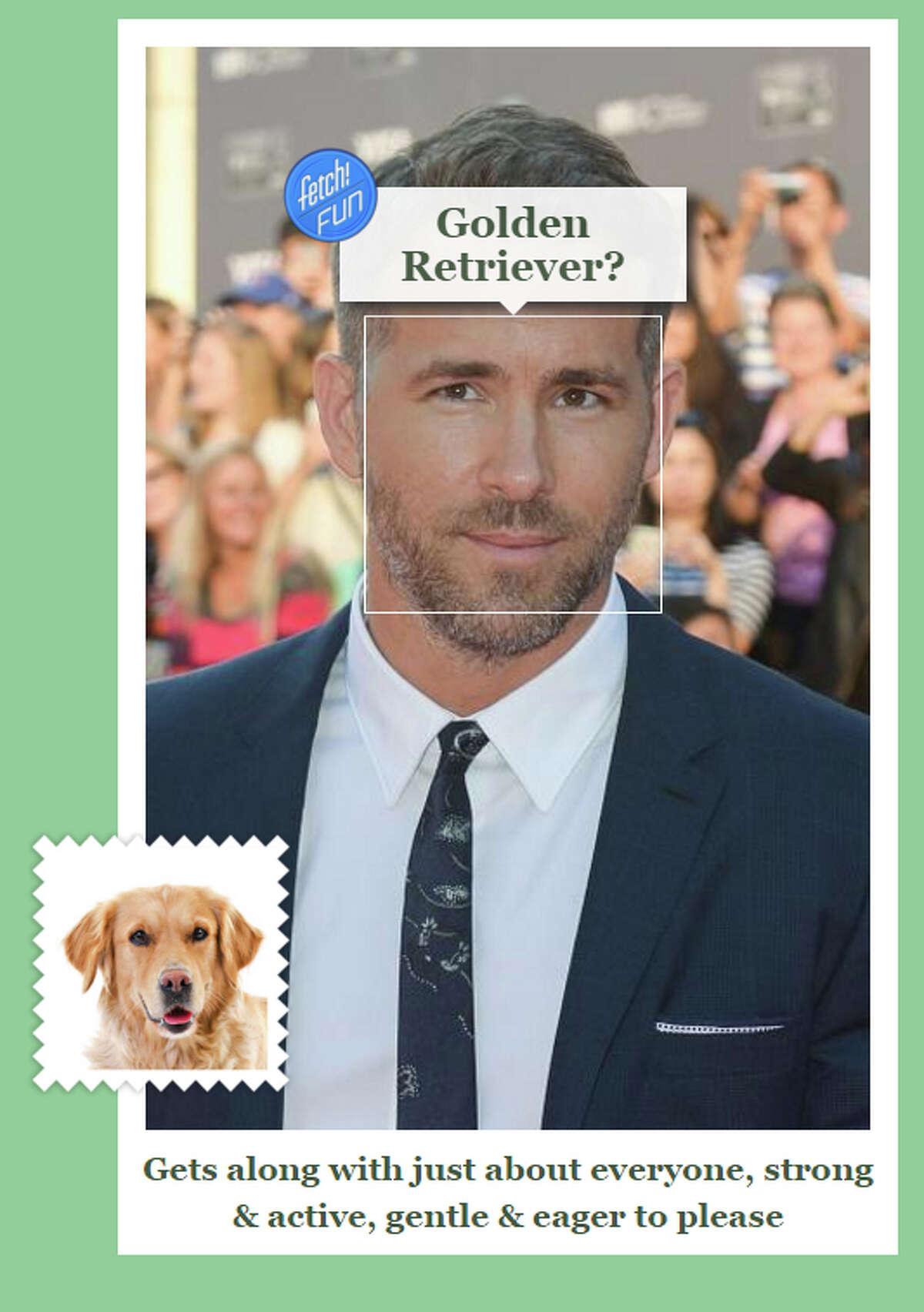 Celebrity: Ryan Reynolds Dog Breed: Golden Retriever
