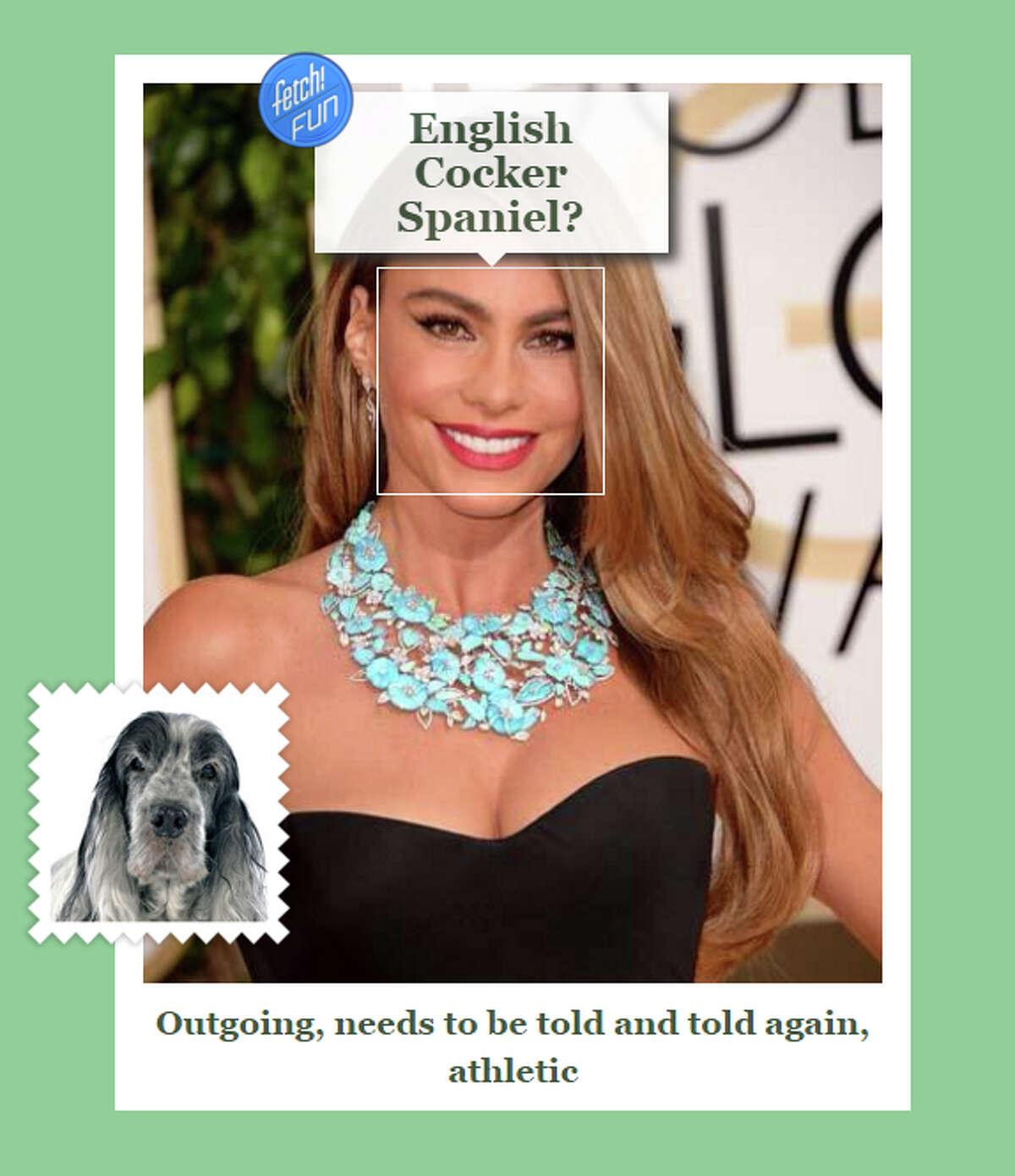 Celebrity: Sofia Vergara Dog Breed: English Cocker Spaniel