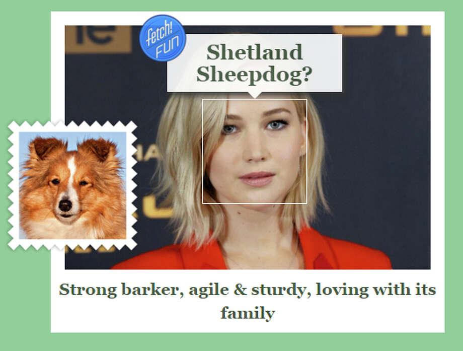 Celebrity:Jennifer LawrenceDog Breed: Shetland Sheepdog Photo: Screen Shot Image/What-dog.net