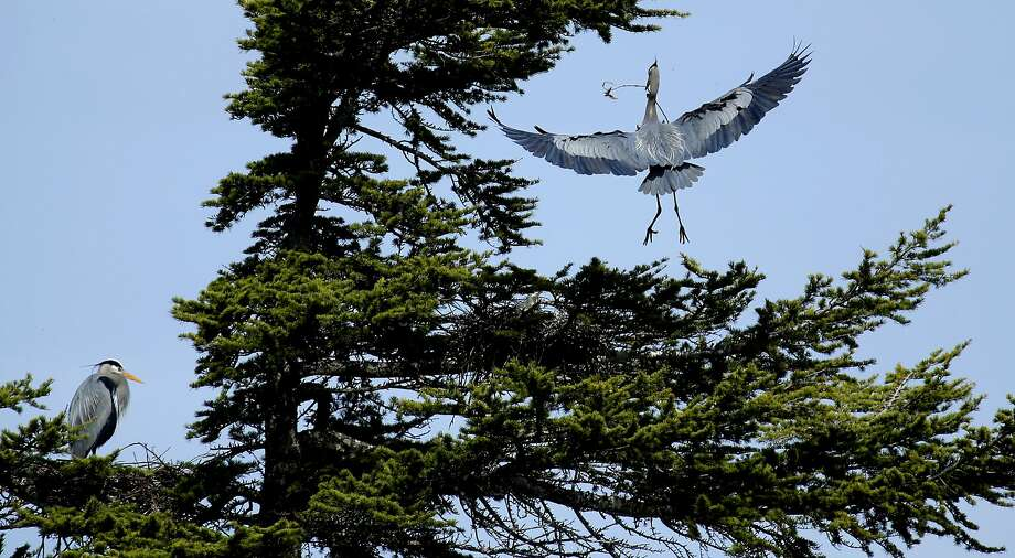 A Festival Of Cranes Bay Nature >> Mare Island Flyway Fest Celebrates Bay Area S Winged Visitors Sfgate