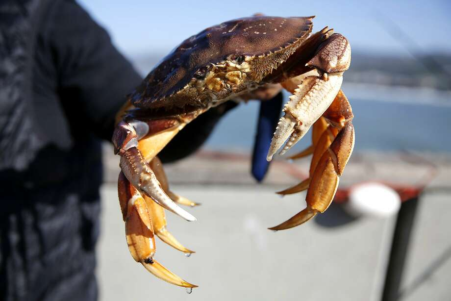 Jimmy Narag holds one of the Dungeness crabs he caught off Pacifica Municipal Pier in Pacifica on Sunday, Feb. 21. Photo: Connor Radnovich, The Chronicle