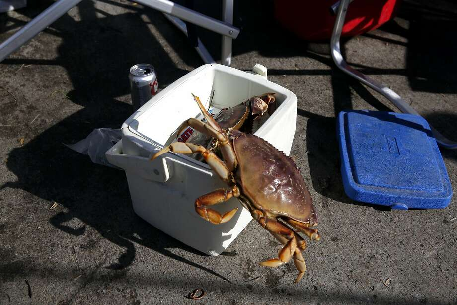A just-caught crab scuttles out of a cooler on Pacifica Municipal Pier in Pacifica on Sunday, Feb. 21. Photo: Connor Radnovich, The Chronicle